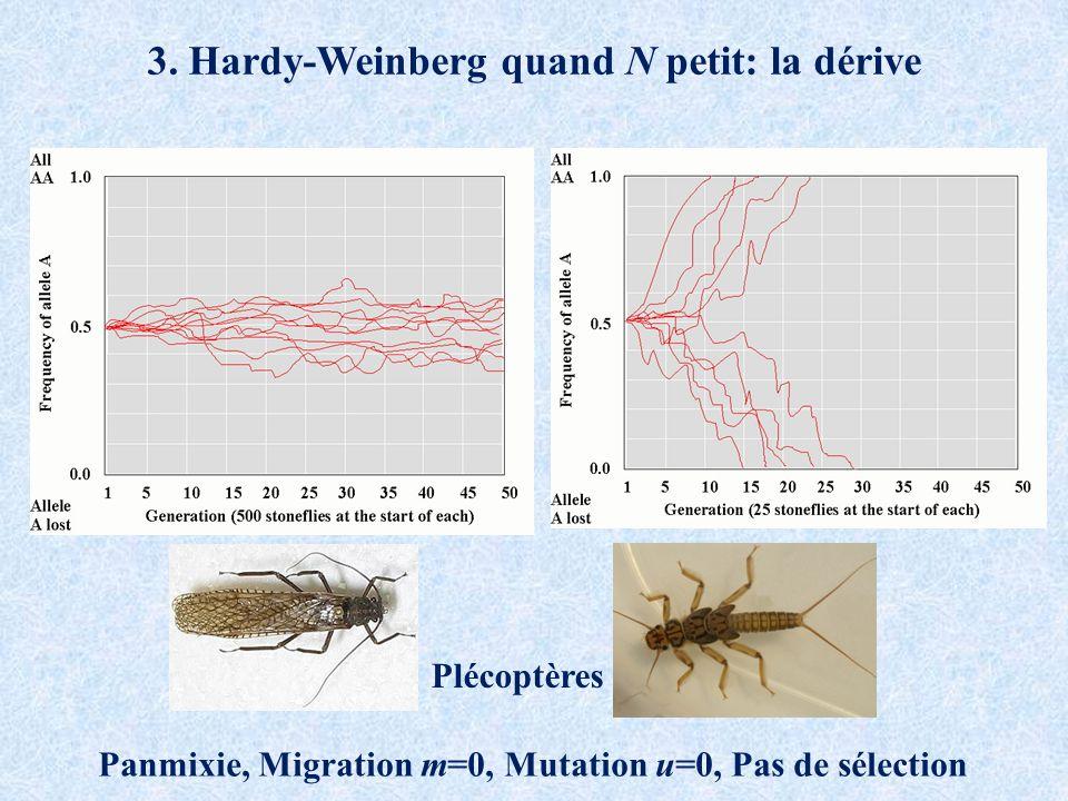 3. Hardy-Weinberg quand N petit: la dérive Panmixie, Migration m=0, Mutation u=0, Pas de sélection Plécoptères