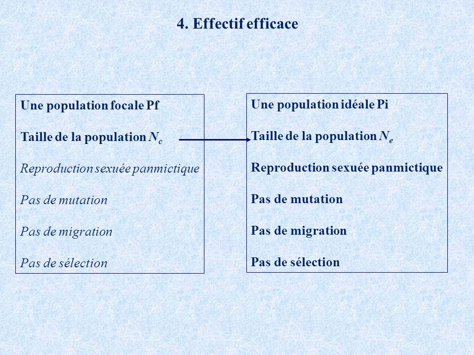 4. Effectif efficace Une population idéale Pi Taille de la population N e Reproduction sexuée panmictique Pas de mutation Pas de migration Pas de séle