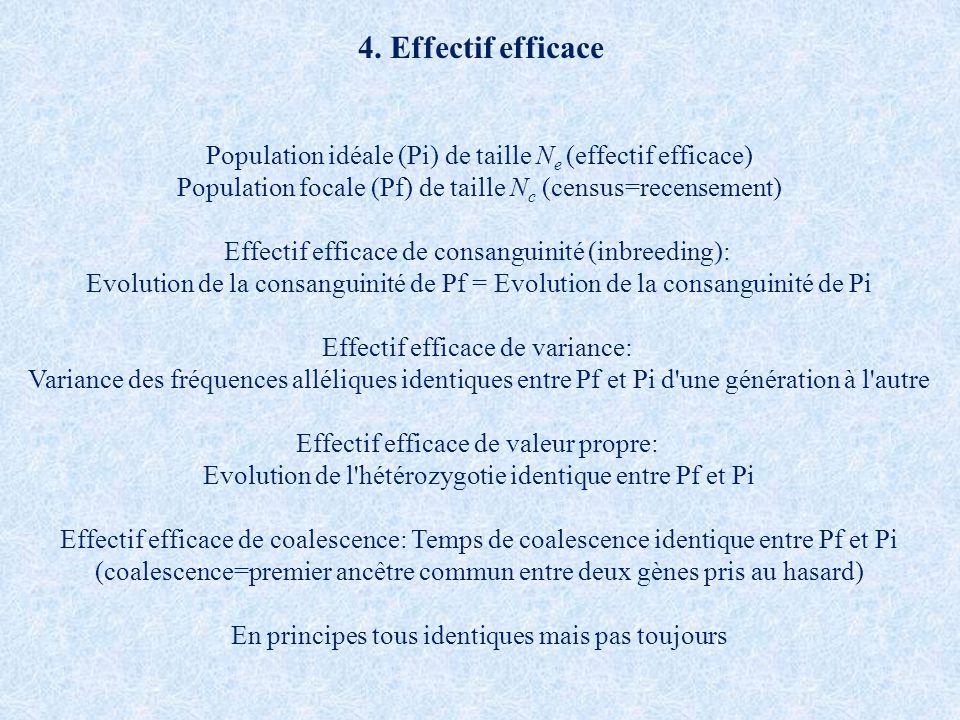 4. Effectif efficace Population idéale (Pi) de taille N e (effectif efficace) Population focale (Pf) de taille N c (census=recensement) Effectif effic