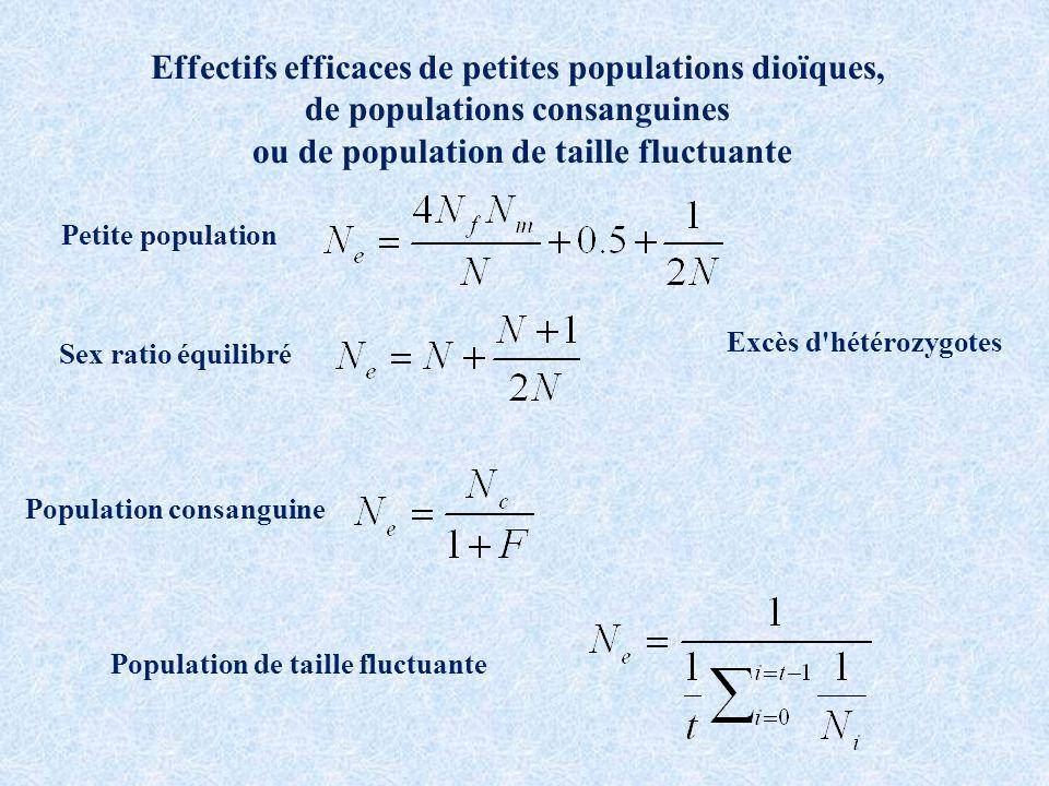 Effectifs efficaces de petites populations dioïques, de populations consanguines ou de population de taille fluctuante Excès d hétérozygotes Sex ratio équilibré Petite population Population consanguine Population de taille fluctuante