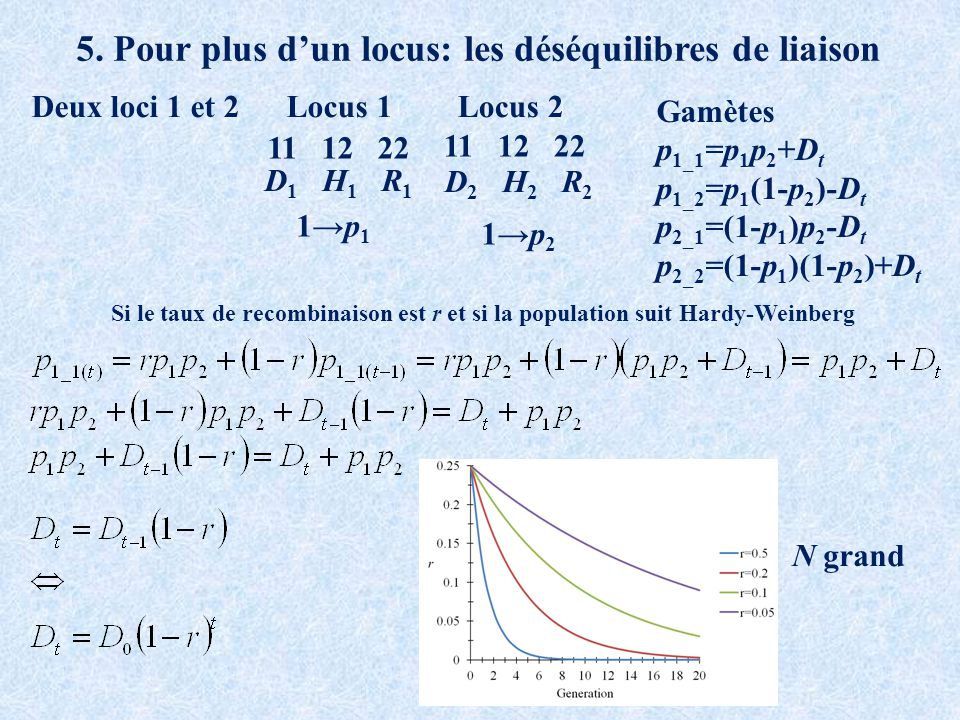 5. Pour plus dun locus: les déséquilibres de liaison Deux loci 1 et 2 11 12 22 Locus 1Locus 2 D 1 H 1 R 1 D 2 H 2 R 2 1p 1 1p 2 Si le taux de recombin