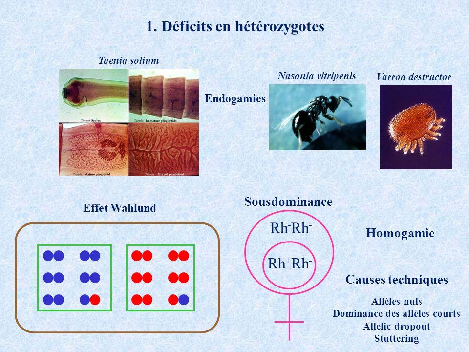 1. Déficits en hétérozygotes Effet Wahlund Taenia solium Nasonia vitripenis Endogamies Rh - Rh + Rh - Sousdominance Causes techniques Allèles nuls Dom