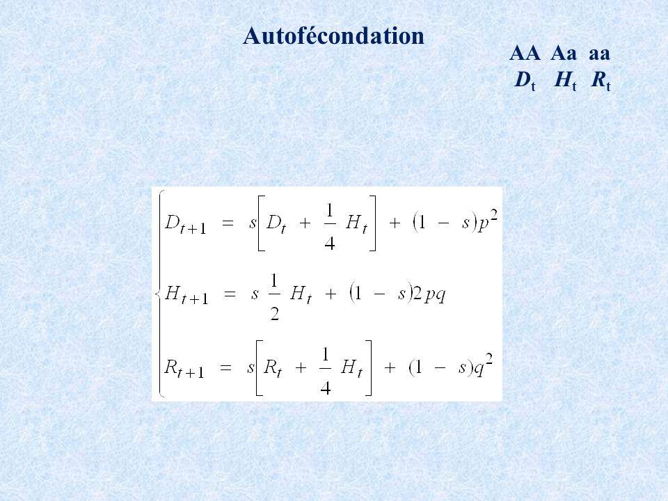 Autofécondation AA Aa aa D t H t R t