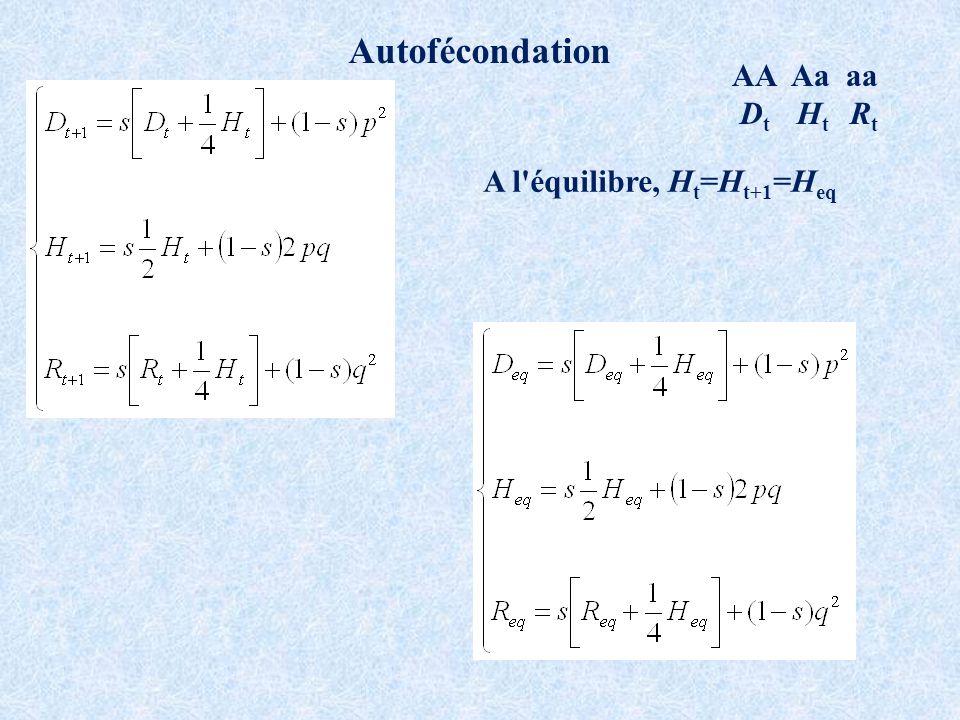 Autofécondation AA Aa aa D t H t R t A l équilibre, H t =H t+1 =H eq