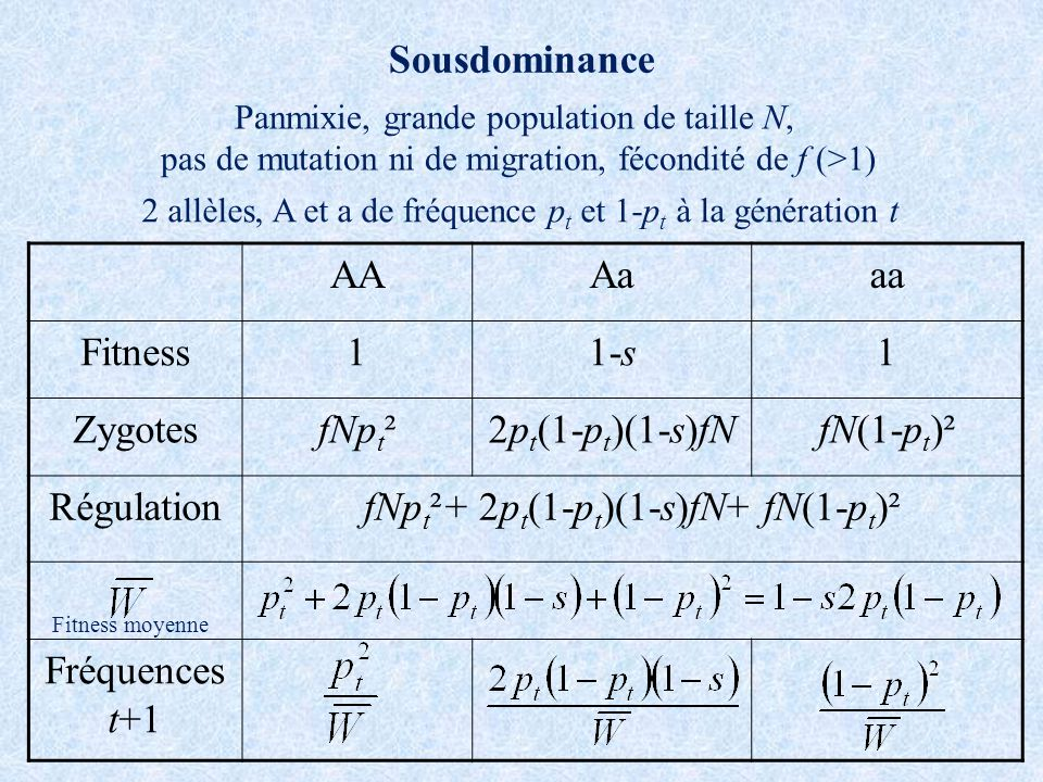 Sousdominance AAAaaa Fitness11-s1 ZygotesfNp t ²2p t (1-p t )(1-s)fNfN(1-p t )² RégulationfNp t ²+ 2p t (1-p t )(1-s)fN+ fN(1-p t )² Fréquences t+1 Pa