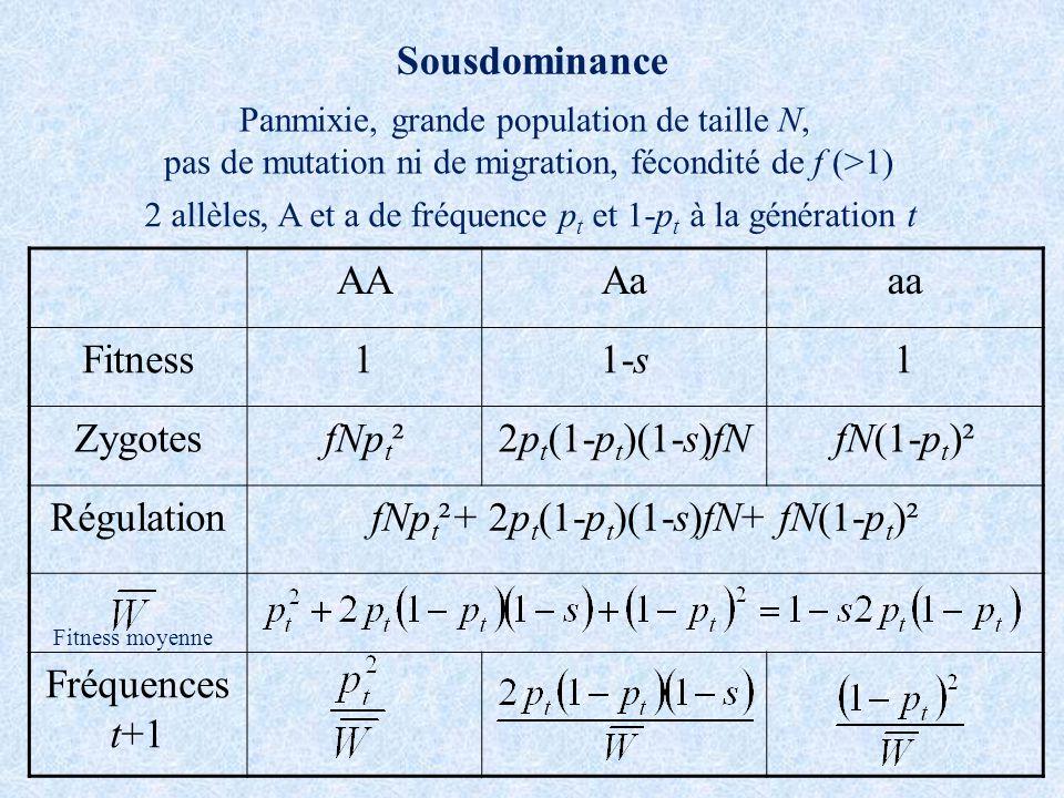 Sousdominance AAAaaa Fitness11-s1 ZygotesfNp t ²2p t (1-p t )(1-s)fNfN(1-p t )² RégulationfNp t ²+ 2p t (1-p t )(1-s)fN+ fN(1-p t )² Fréquences t+1 Panmixie, grande population de taille N, pas de mutation ni de migration, fécondité de f (>1) 2 allèles, A et a de fréquence p t et 1-p t à la génération t Fitness moyenne
