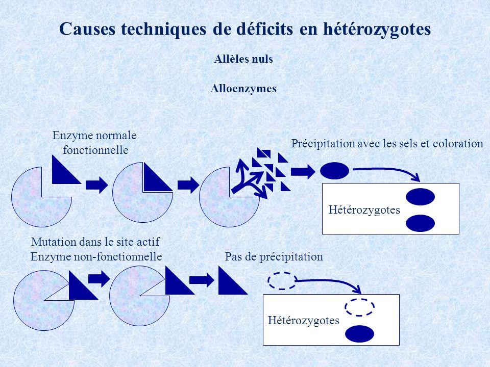 Causes techniques de déficits en hétérozygotes Enzyme normale fonctionnelle Mutation dans le site actif Enzyme non-fonctionnelle Hétérozygotes Précipitation avec les sels et coloration Pas de précipitation Allèles nuls Alloenzymes