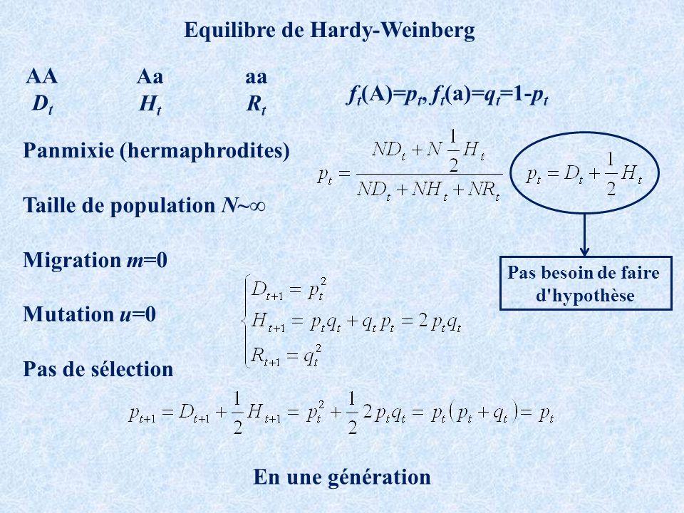 Aa H t aa R t AA D t f t (A)=p t, f t (a)=q t =1-p t Equilibre de Hardy-Weinberg Panmixie (hermaphrodites) Taille de population N~ Migration m=0 Mutation u=0 Pas de sélection En une génération Pas besoin de faire d hypothèse