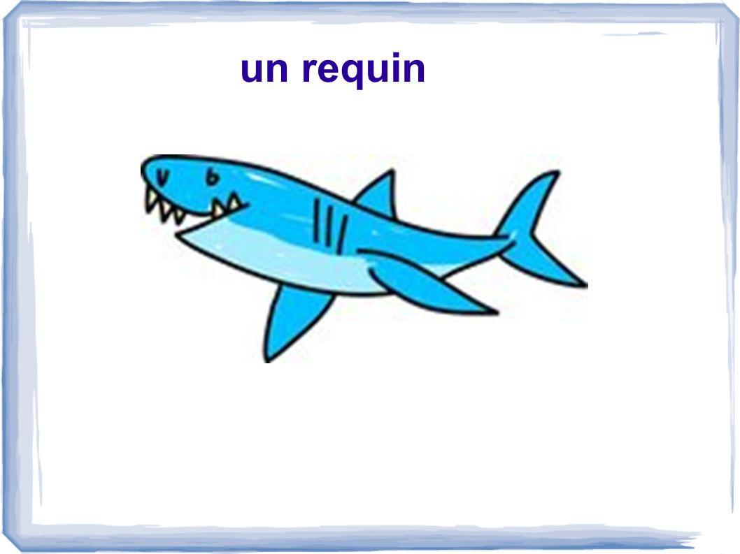un requin