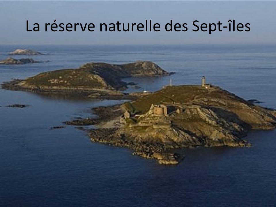 La réserve naturelle des Sept-îles