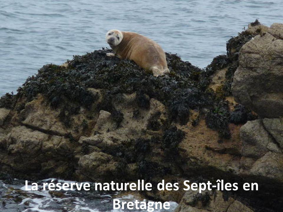 La réserve naturelle des Sept-îles en Bretagne