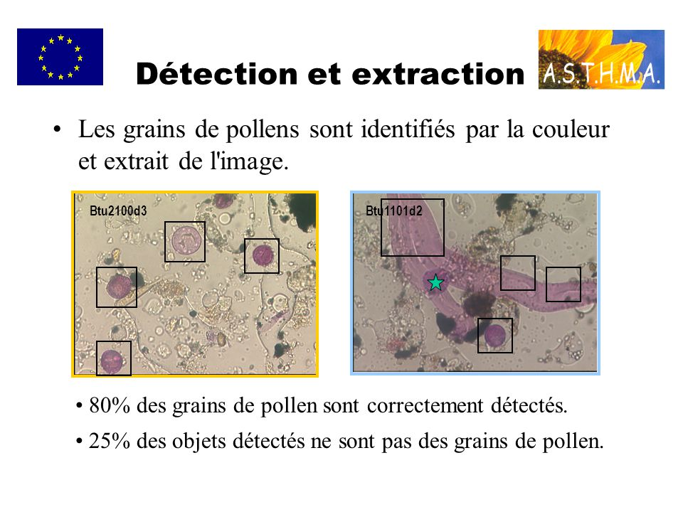 Détection et extraction Les grains de pollens sont identifiés par la couleur et extrait de l'image. Btu2100d3Btu1101d2 80% des grains de pollen sont c