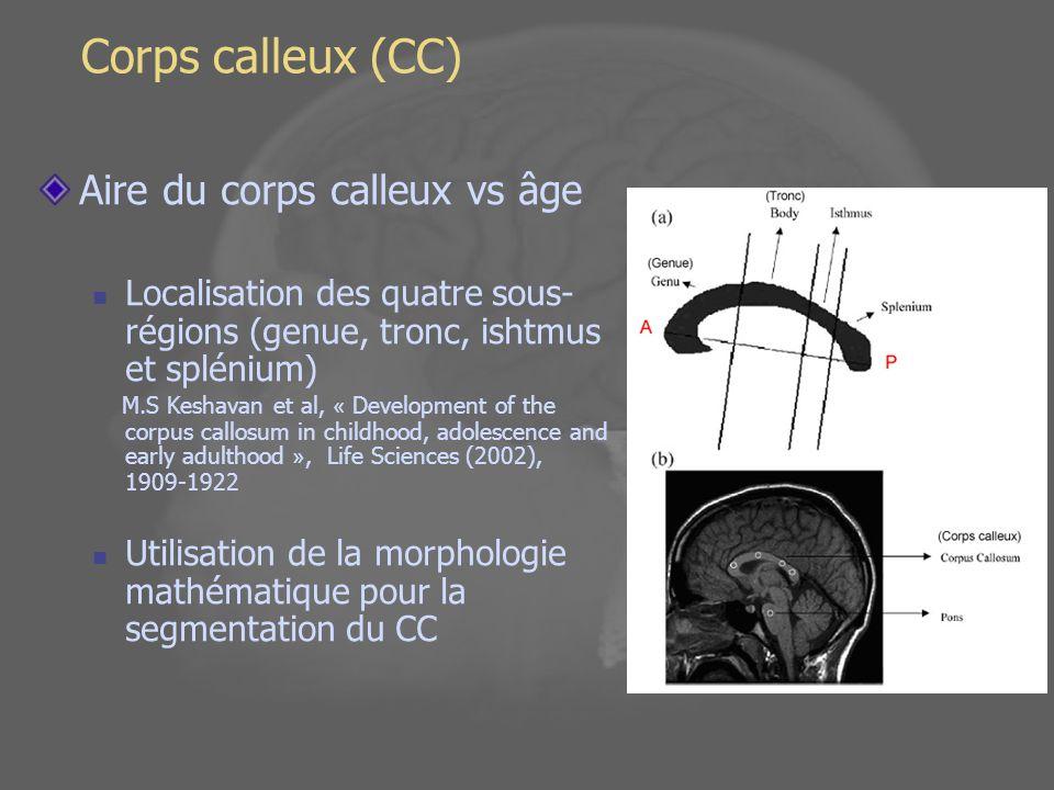 Calcul de aire des sous régions du corps calleux