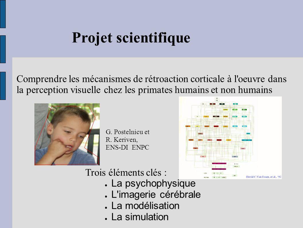 Projet scientifique Comprendre les mécanismes de rétroaction corticale à l'oeuvre dans la perception visuelle chez les primates humains et non humains