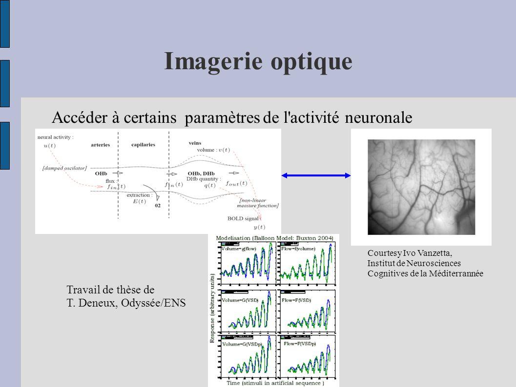 Imagerie optique Accéder à certains paramètres de l activité neuronale Courtesy Ivo Vanzetta, Institut de Neurosciences Cognitives de la Méditerrannée Travail de thèse de T.