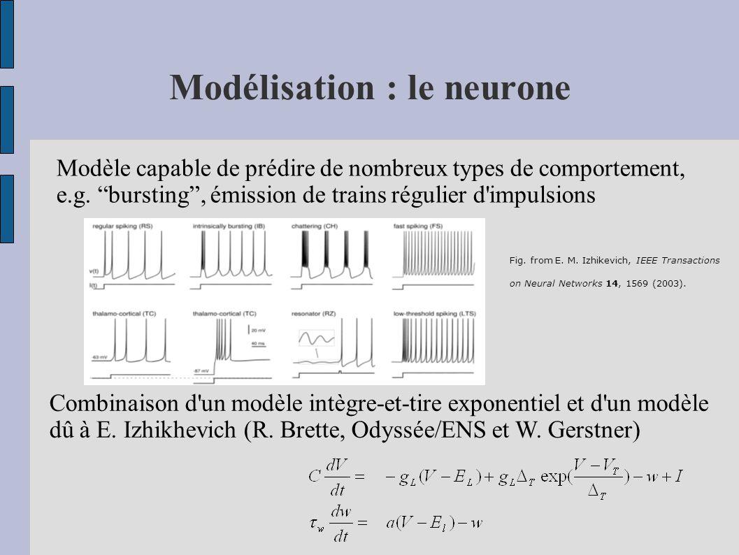 Modélisation : le neurone Modèle capable de prédire de nombreux types de comportement, e.g. bursting, émission de trains régulier d'impulsions Combina