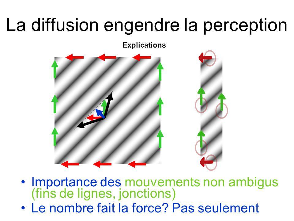 La diffusion engendre la perception Importance des mouvements non ambigus (fins de lignes, jonctions) Le nombre fait la force.