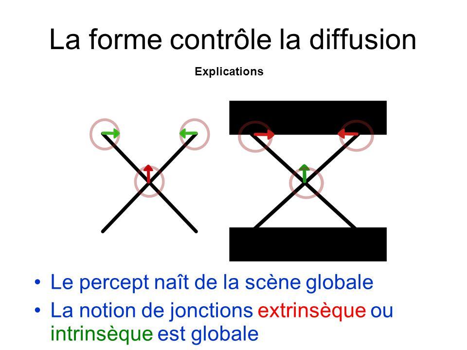 La forme contrôle la diffusion Le percept naît de la scène globale La notion de jonctions extrinsèque ou intrinsèque est globale Explications