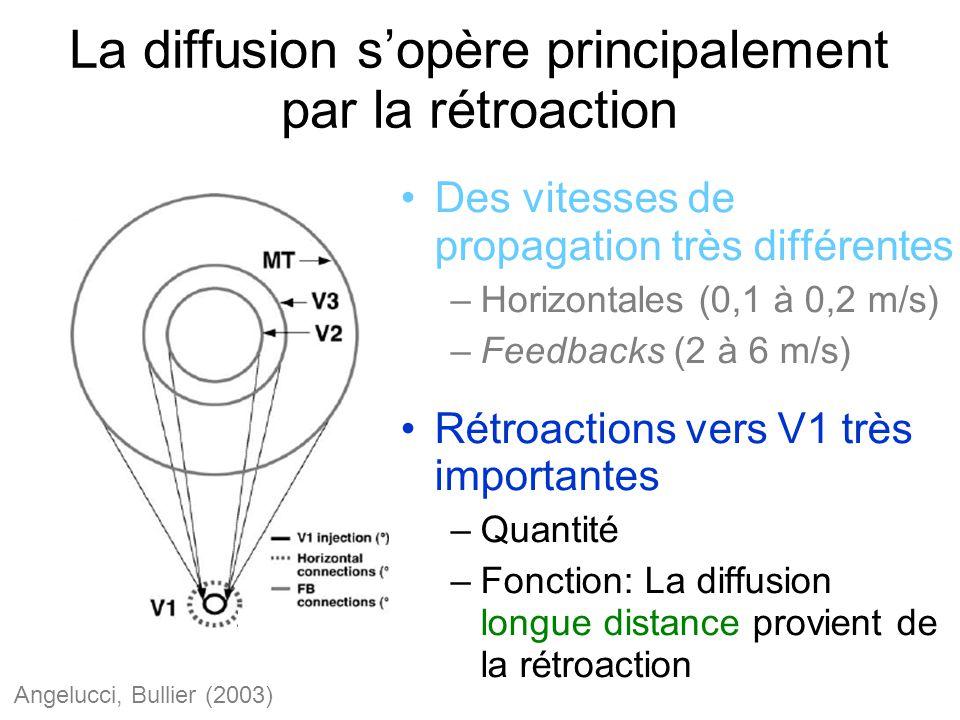 La diffusion sopère principalement par la rétroaction Des vitesses de propagation très différentes –Horizontales (0,1 à 0,2 m/s) –Feedbacks (2 à 6 m/s) Rétroactions vers V1 très importantes –Quantité –Fonction: La diffusion longue distance provient de la rétroaction Angelucci, Bullier (2003)