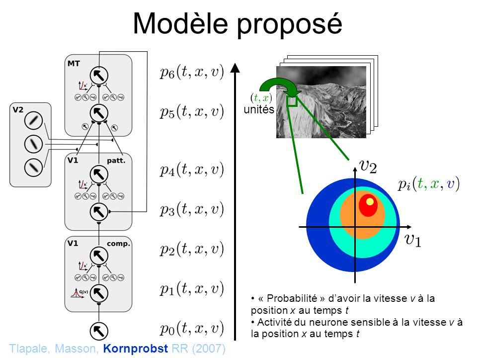 Modèle proposé Tlapale, Masson, Kornprobst RR (2007) « Probabilité » davoir la vitesse v à la position x au temps t Activité du neurone sensible à la vitesse v à la position x au temps t unités