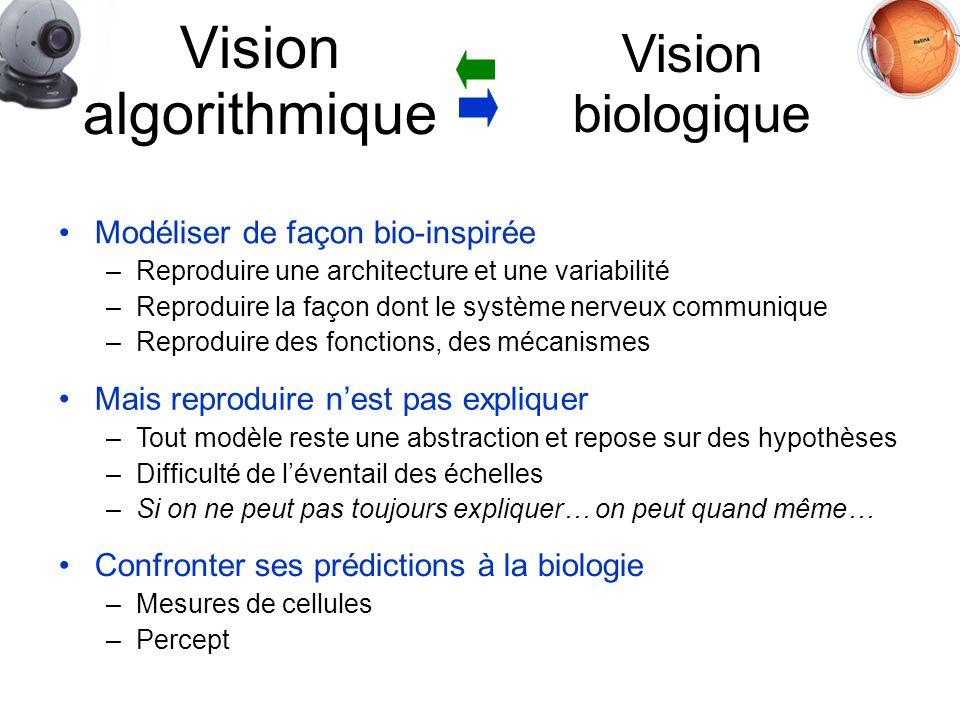 Modéliser de façon bio-inspirée –Reproduire une architecture et une variabilité –Reproduire la façon dont le système nerveux communique –Reproduire des fonctions, des mécanismes Vision algorithmique Vision biologique Confronter ses prédictions à la biologie –Mesures de cellules –Percept Mais reproduire nest pas expliquer –Tout modèle reste une abstraction et repose sur des hypothèses –Difficulté de léventail des échelles –Si on ne peut pas toujours expliquer… on peut quand même…