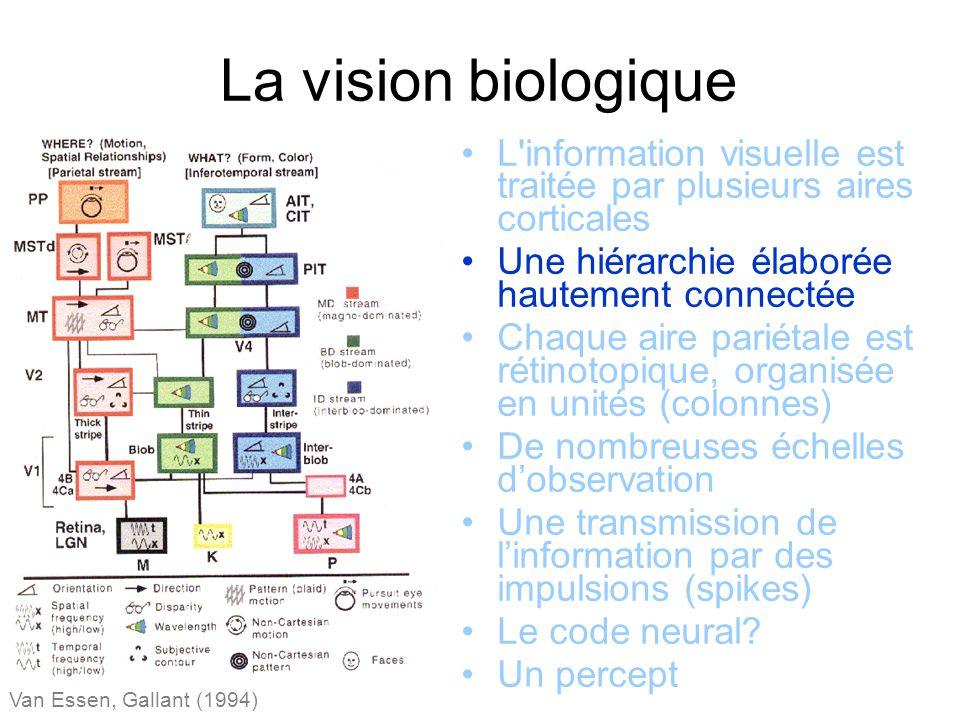 La vision biologique Van Essen, Gallant (1994) L information visuelle est traitée par plusieurs aires corticales Une hiérarchie élaborée hautement connectée Chaque aire pariétale est rétinotopique, organisée en unités (colonnes) De nombreuses échelles dobservation Une transmission de linformation par des impulsions (spikes) Le code neural.