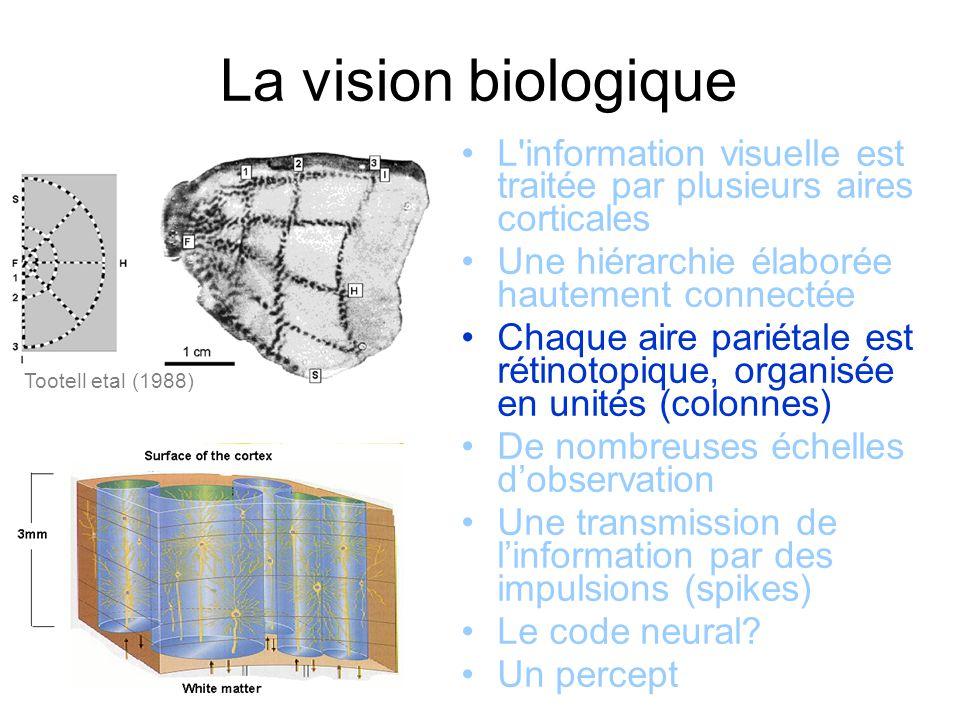 La vision biologique Tootell etal (1988) L information visuelle est traitée par plusieurs aires corticales Une hiérarchie élaborée hautement connectée Chaque aire pariétale est rétinotopique, organisée en unités (colonnes) De nombreuses échelles dobservation Une transmission de linformation par des impulsions (spikes) Le code neural.