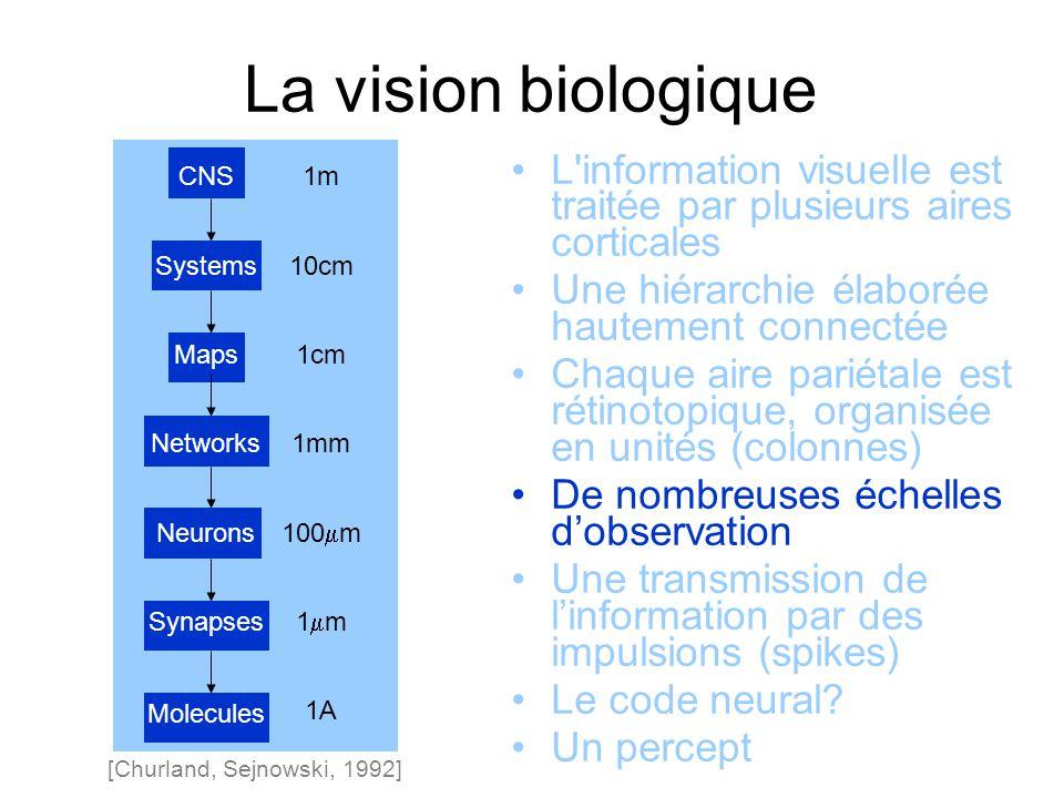 La vision biologique [Churland, Sejnowski, 1992] 1m 10cm 1cm 1mm 100 m 1 m 1A CNS Systems Maps Networks Neurons Synapses Molecules L information visuelle est traitée par plusieurs aires corticales Une hiérarchie élaborée hautement connectée Chaque aire pariétale est rétinotopique, organisée en unités (colonnes) De nombreuses échelles dobservation Une transmission de linformation par des impulsions (spikes) Le code neural.