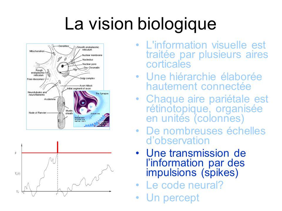 La vision biologique L information visuelle est traitée par plusieurs aires corticales Une hiérarchie élaborée hautement connectée Chaque aire pariétale est rétinotopique, organisée en unités (colonnes) De nombreuses échelles dobservation Une transmission de linformation par des impulsions (spikes) Le code neural.