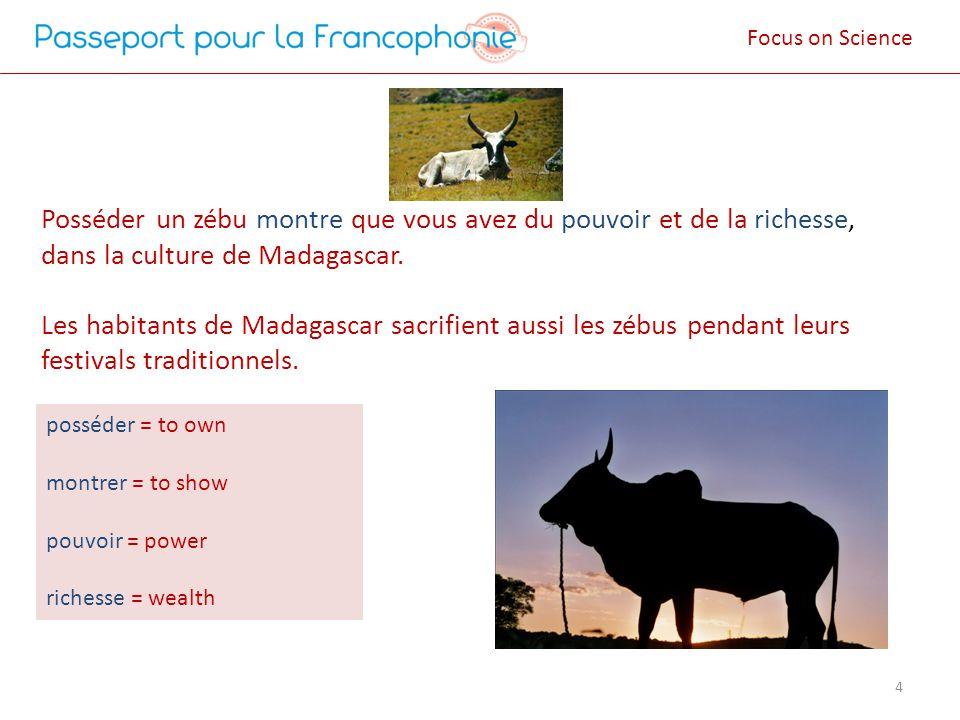 Posséder un zébu montre que vous avez du pouvoir et de la richesse, dans la culture de Madagascar. Les habitants de Madagascar sacrifient aussi les zé