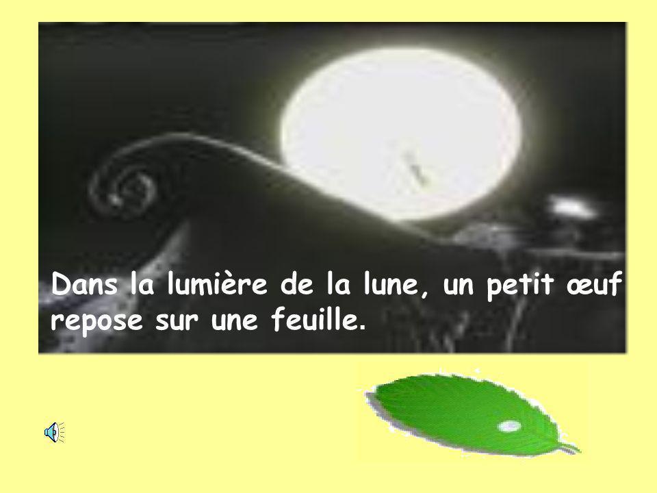 Dans la lumière de la lune, un petit œuf repose sur une feuille.