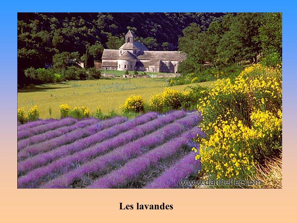 Le cœur de la Provence bat dans les collines qui relient la mer aux montagnes des Alpes.