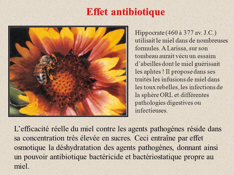 Effet antibiotique Hippocrate (460 à 377 av.J.C.) utilisait le miel dans de nombreuses formules.