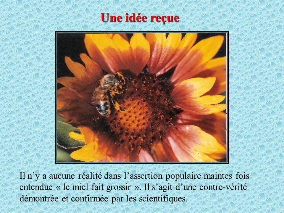 Une idée reçue Il ny a aucune réalité dans lassertion populaire maintes fois entendue « le miel fait grossir ».