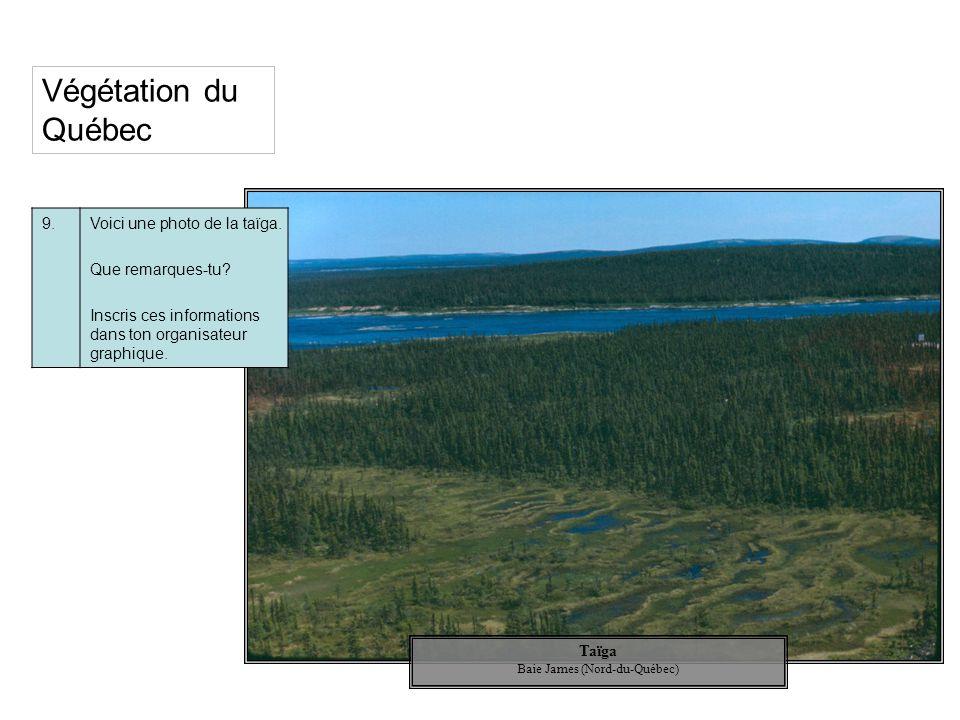 Végétation du Québec 9.Voici une photo de la taïga. Que remarques-tu? Inscris ces informations dans ton organisateur graphique. Taïga Baie James (Nord