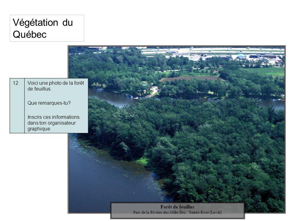 Végétation du Québec 12.Voici une photo de la forêt de feuillus. Que remarques-tu? Inscris ces informations dans ton organisateur graphique. Forêt de