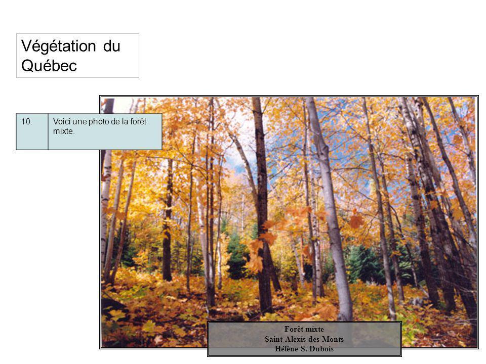 Végétation du Québec 10.Voici une photo de la forêt mixte. Forêt mixte Saint-Alexis-des-Monts Hélène S. Dubois