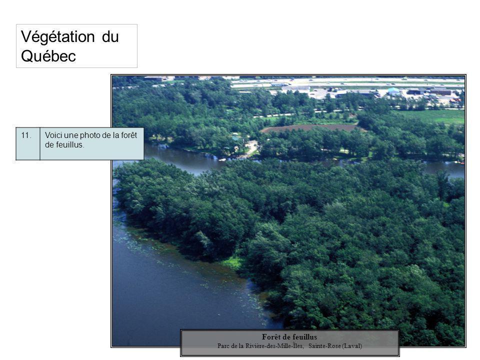 Végétation du Québec 11.Voici une photo de la forêt de feuillus. Forêt de feuillus Parc de la Rivière-des-Mille-Îles, Sainte-Rose (Laval)