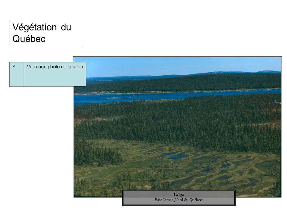 Végétation du Québec 8.Voici une photo de la taïga. Taïga Baie James (Nord-du-Québec)
