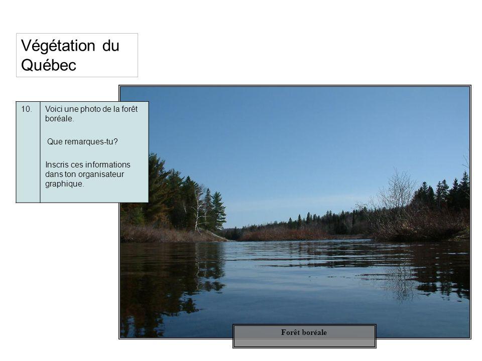 Végétation du Québec 10.Voici une photo de la forêt boréale. Que remarques-tu? Inscris ces informations dans ton organisateur graphique. Forêt boréale