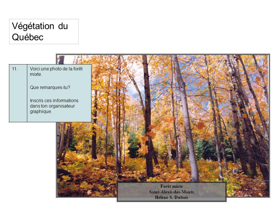 Végétation du Québec 11.Voici une photo de la forêt mixte. Que remarques-tu? Inscris ces informations dans ton organisateur graphique. Forêt mixte Sai