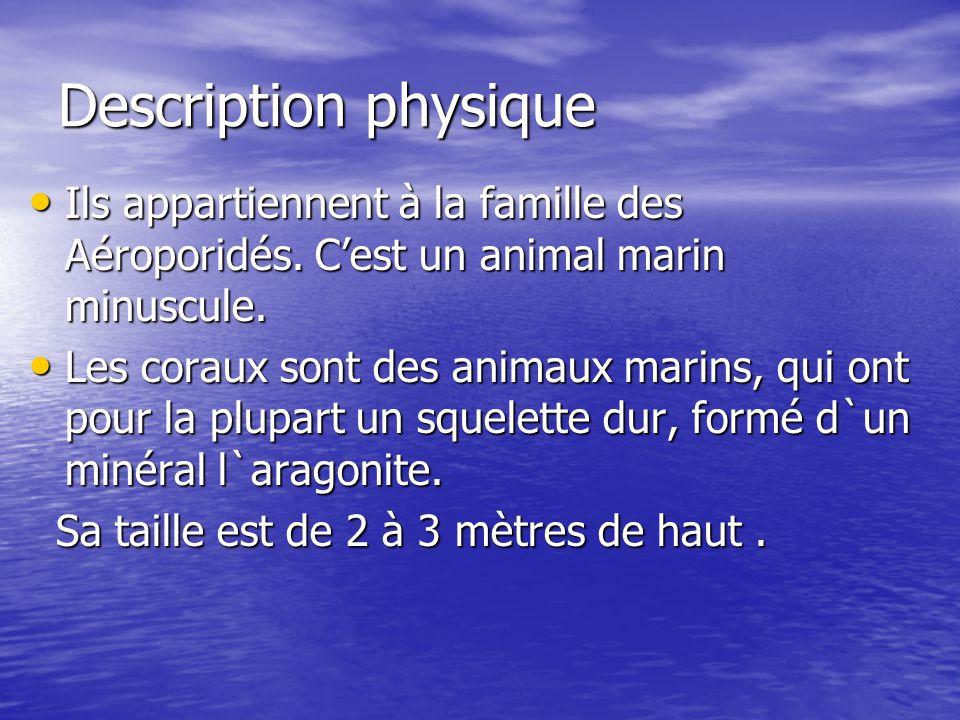 Description physique Ils appartiennent à la famille des Aéroporidés. Cest un animal marin minuscule. Les coraux sont des animaux marins, qui ont pour