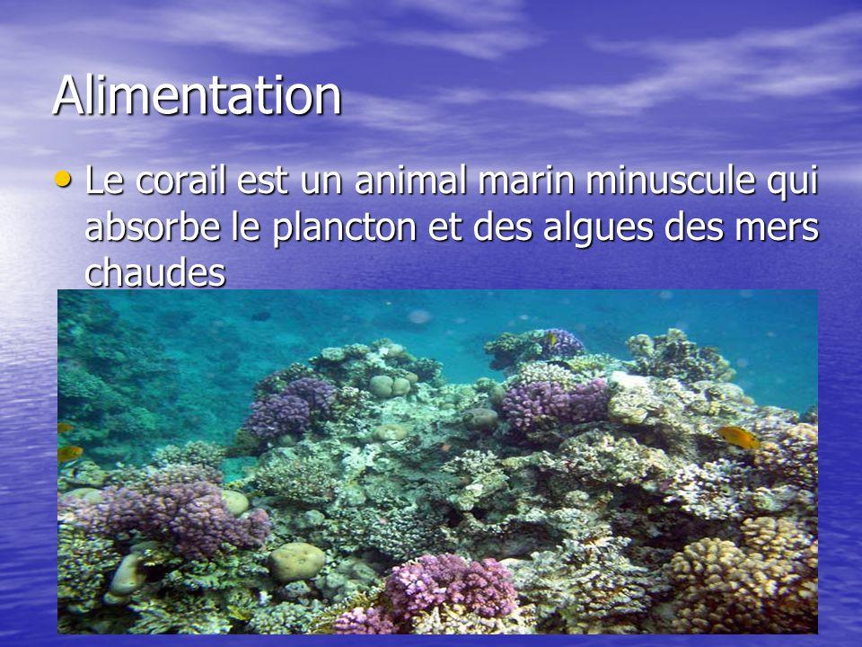 Alimentation Le corail est un animal marin minuscule qui absorbe le plancton et des algues des mers chaudes