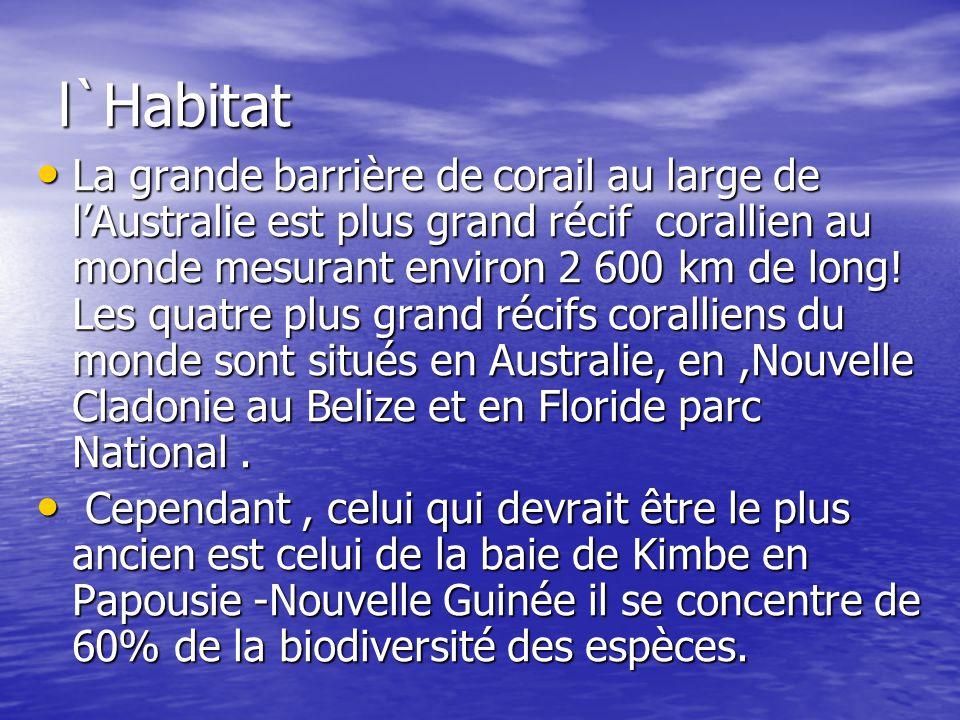 l`Habitat La grande barrière de corail au large de lAustralie est plus grand récif corallien au monde mesurant environ 2 600 km de long! Les quatre pl