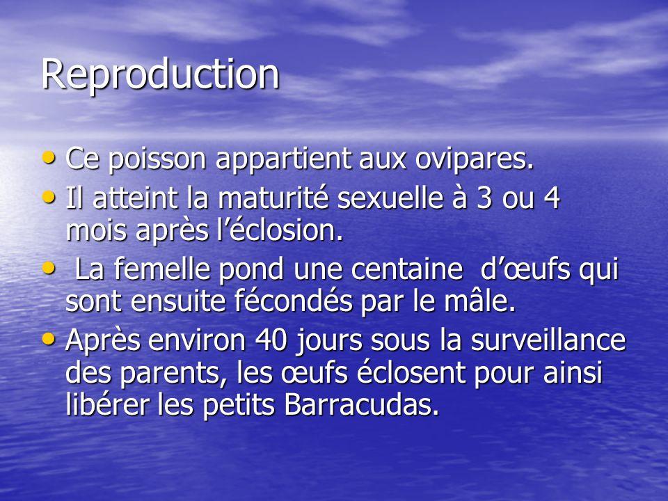 Reproduction Ce poisson appartient aux ovipares. Ce poisson appartient aux ovipares. Il atteint la maturité sexuelle à 3 ou 4 mois après léclosion. Il