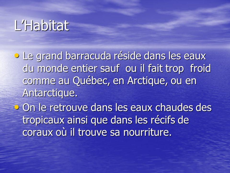 LHabitat Le grand barracuda réside dans les eaux du monde entier sauf ou il fait trop froid comme au Québec, en Arctique, ou en Antarctique. Le grand