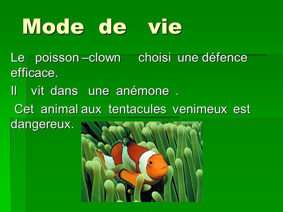 Mode de vie Le poisson –clown choisi une défence efficace. Il vit dans une anémone. Cet animal aux tentacules venimeux est dangereux. Cet animal aux t