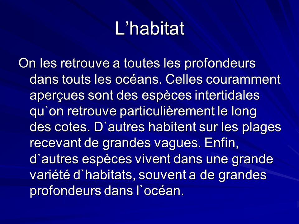 Lhabitat On les retrouve a toutes les profondeurs dans touts les océans. Celles couramment aperçues sont des espèces intertidales qu`on retrouve parti