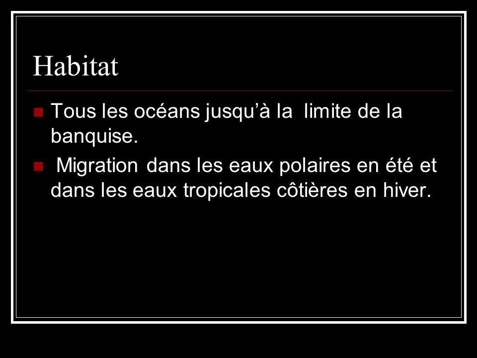 Habitat Tous les océans jusquà la limite de la banquise. Migration dans les eaux polaires en été et dans les eaux tropicales côtières en hiver.