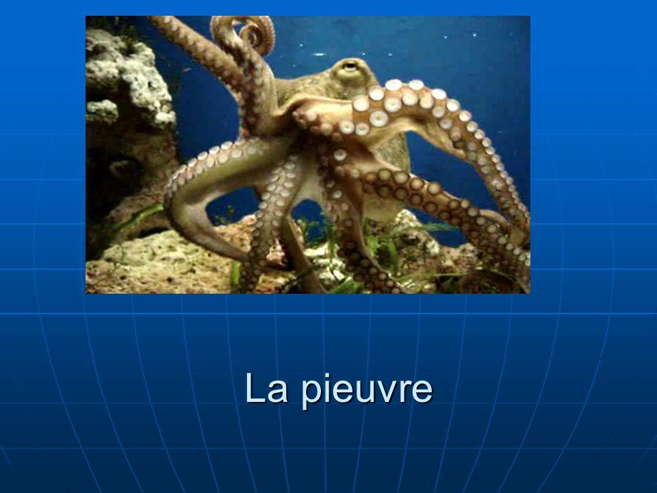 Description physique La pieuvre géante dune couleur rougeâtre.